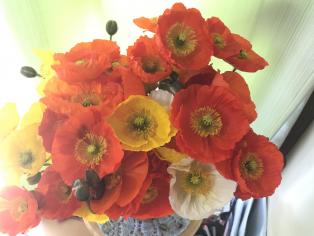 我が家の春は南房総より始まります ポピーの里・館山ファミリーパークとピース製菓(館山市)