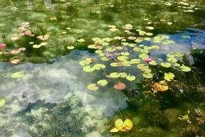 どう写真を撮ってもモネの睡蓮になってしまうこの奇跡 名もなき池(通称:モネの池)岐阜県関市